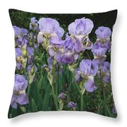 Bed Of Irises, Provence Region, France Throw Pillow
