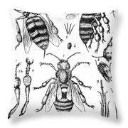 Bee Anatomy Historical Illustration Throw Pillow
