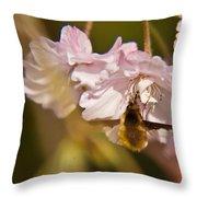 Bee Fly Feeding 1 Throw Pillow