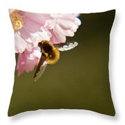 Bee Fly Feeding 4 Throw Pillow