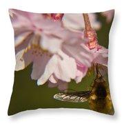 Bee Fly Feeding 8 Throw Pillow