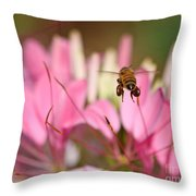 Bee In Flight Over Cleome Flower Throw Pillow