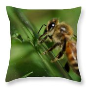 Bee In Green Throw Pillow