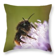 Bee In Pollen Throw Pillow