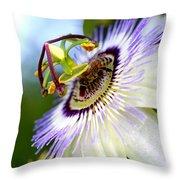 Bee On A Nigella Throw Pillow