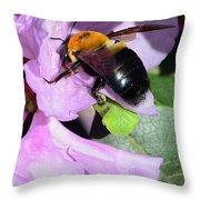 Bee On Azalea Bloom Throw Pillow by Lisa Phillips
