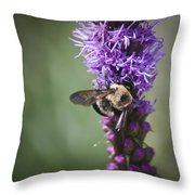 Bee On Gayfeather Squared 1 Throw Pillow