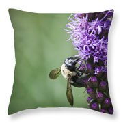 Bee On Gayfeather Throw Pillow