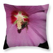 Bee On Rose Of Sharon Throw Pillow