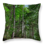 Beech Mountain Trail Acadia Throw Pillow