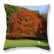 Beech Tree, Glendalough, Co Wicklow Throw Pillow