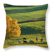 Beef Cattle Grazing In Autumn, North Throw Pillow