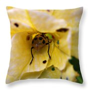 Beetle In Yellow Flower Throw Pillow