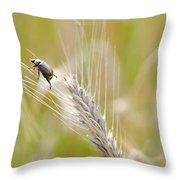 Beetle On The Wheat Throw Pillow