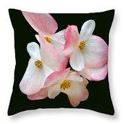 Begonia Flower Gems Throw Pillow