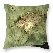 Beige Juvenile Filefish Hiding Throw Pillow