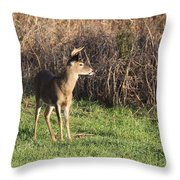 Being Aware - Deer Throw Pillow