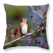 Being Nosey Throw Pillow