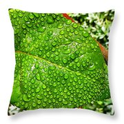 Bejewelled By Rain  Throw Pillow