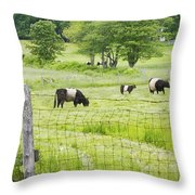 Belted Galloway Cows On  Farm Rockport Maine Photo Throw Pillow