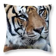 Bengal Throw Pillow by Elizabeth Hart