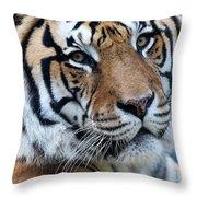 Bengal Throw Pillow