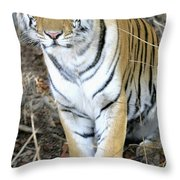 Bengal Tiger In Pench National Park Throw Pillow