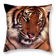 Bengal Tiger In Thought Throw Pillow