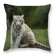 Bengal Tiger Panthera Tigris Tigris Throw Pillow