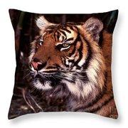 Bengal Tiger Watching Prey Throw Pillow