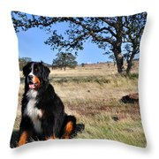 Bernese Mountain Dog In California Chaparral Throw Pillow
