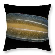 Beroe Cucumis Comb Jelly Throw Pillow by Ingo Arndt