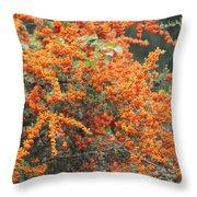Berry Orange Throw Pillow