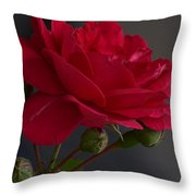 Betty's Red Rose II  Throw Pillow