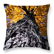 Big Autumn Tree In Fall Park Throw Pillow