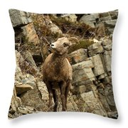 Big Horn On The Rocks Throw Pillow