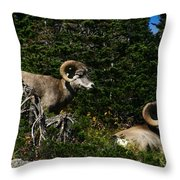 Big Horn Sheep Glacier National Park Throw Pillow