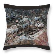 Big Horn Sheep3 Throw Pillow