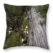 Big Tree In Prairie Creek Redwoods State Park Throw Pillow