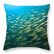 Bigeye Snappers Lutjanus Lutjanus Throw Pillow