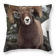 Bighorn Sheep, Maligne Canyon, Jasper Throw Pillow