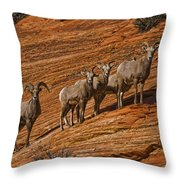 Bighorn Sheep, Zion National Park, Utah Throw Pillow
