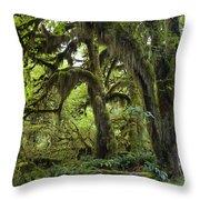 Bigleaf Maple Acer Macrophyllum Throw Pillow