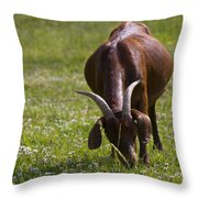 Billy Goat Or Nanny Goat  Throw Pillow