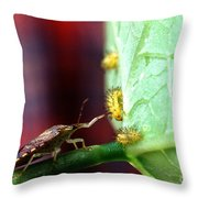 Biocontrol Of Bean Beetle Throw Pillow