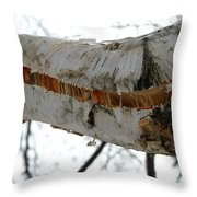 Birch Damaged In Ice Storm Throw Pillow