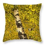 Birch Forest In Finland Throw Pillow