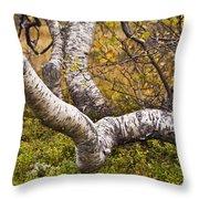 Birch Trees In Autumn Foliage Throw Pillow