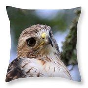 Bird - Red-tailed Hawk - Bashful Throw Pillow