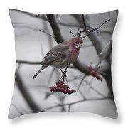 Bird And Berry 3 Throw Pillow